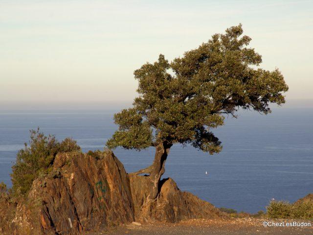 Toore de Madaloc (656m)